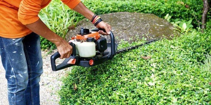 Can You Cut Brambles with A Hedge Trimmer